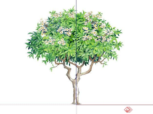 鸡蛋花手绘2D植物SketchUp(SU)3D模型