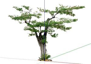 2D乔木43SketchUp(SU(草图大师))模型
