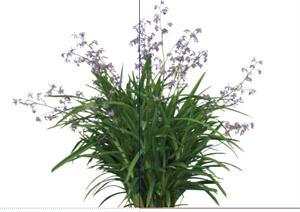 2D灌木花卉43SketchUp(SU(草图大师))模型
