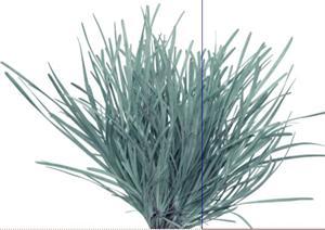2D灌木花卉45SketchUp(SU(草图大师))模型
