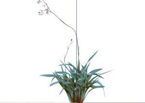2D灌木花卉50SketchUp(SU(草图大师))模型