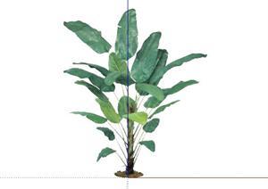 2D灌木花卉55SketchUp(SU(草图大师))模型