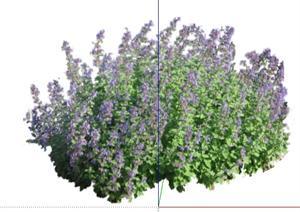 2D灌木花卉6SketchUp(SU(草图大师))模型
