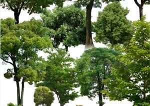 园林植物乔木素材 很好用