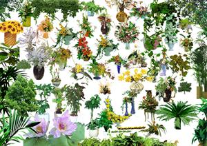 园林植物ps素材