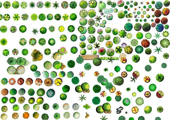 多个手绘平面景观植物效果图配景素材